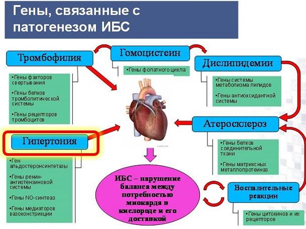 лекарства от холестерина аторвастатин цена