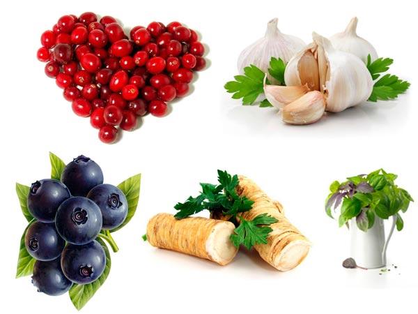 5 сильных природных антибиотиков