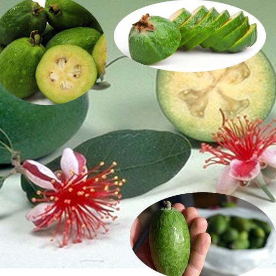 Фейхоа фото фрукта
