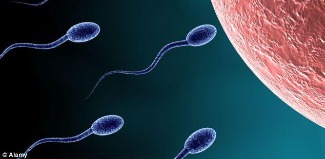 referat-na-temu-sperma