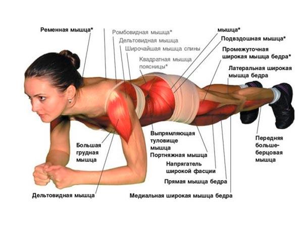 kulinariya2k.ru - Упражнение планка заставляет работать не т…